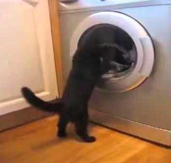 washing5